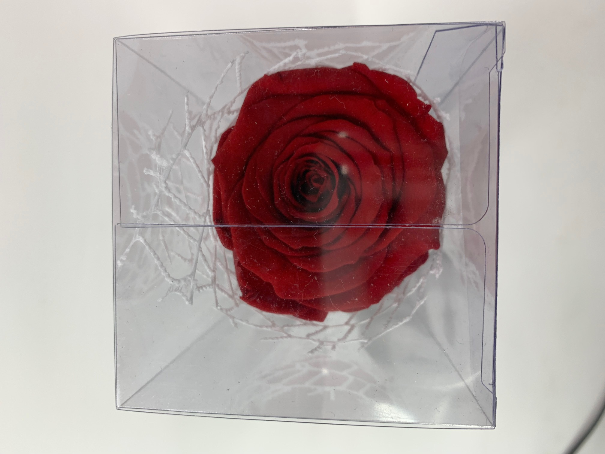 Valentine XL Last4ever Real Rose in giftbox