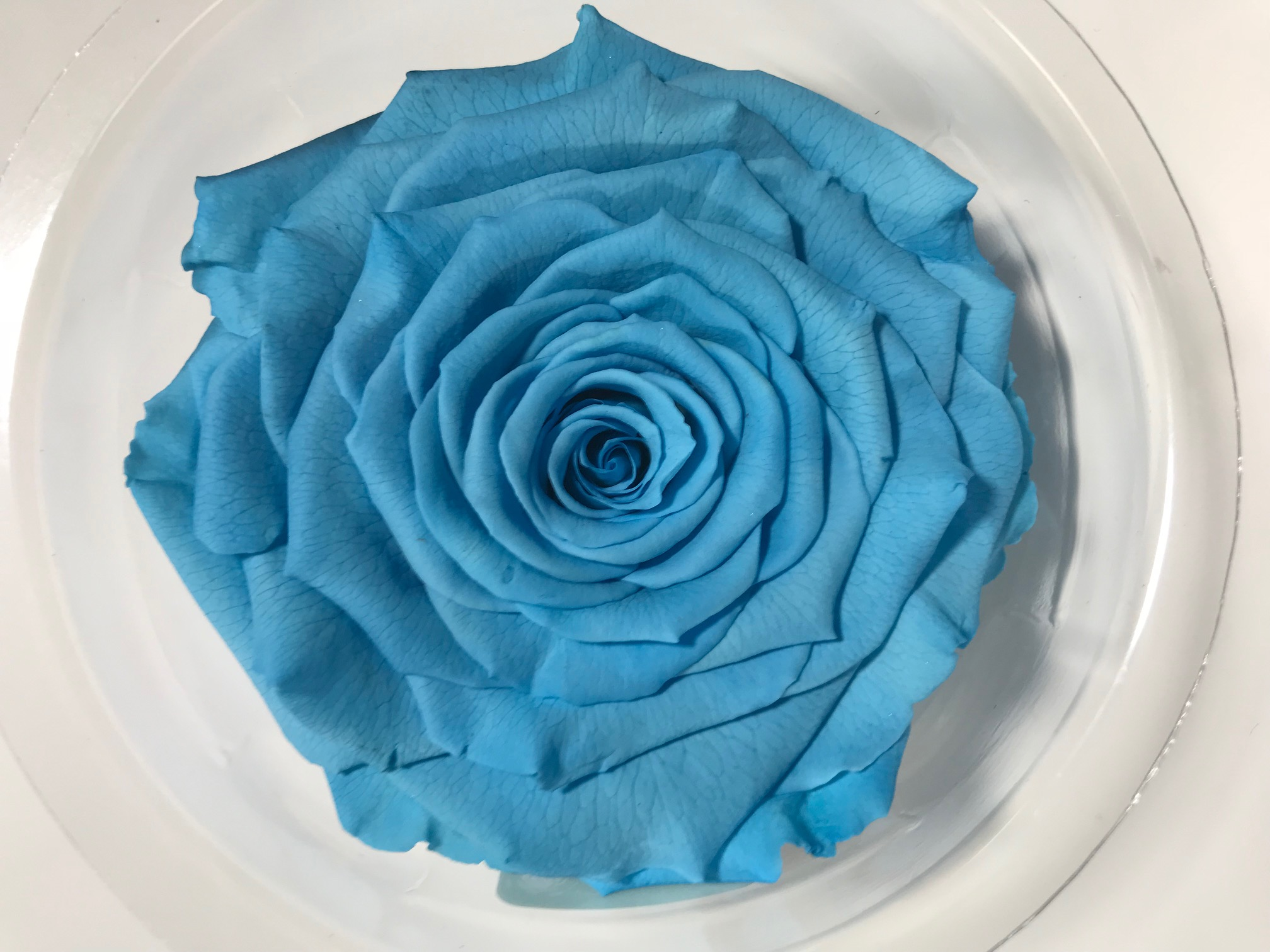 Last4ever Real Rose XXL BLU-01