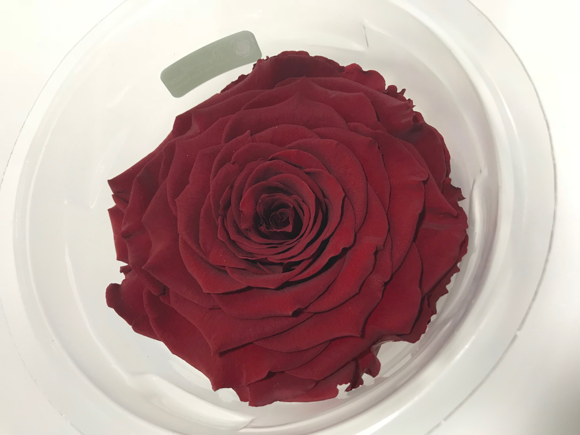 Last4ever Real Rose XXL RED-01