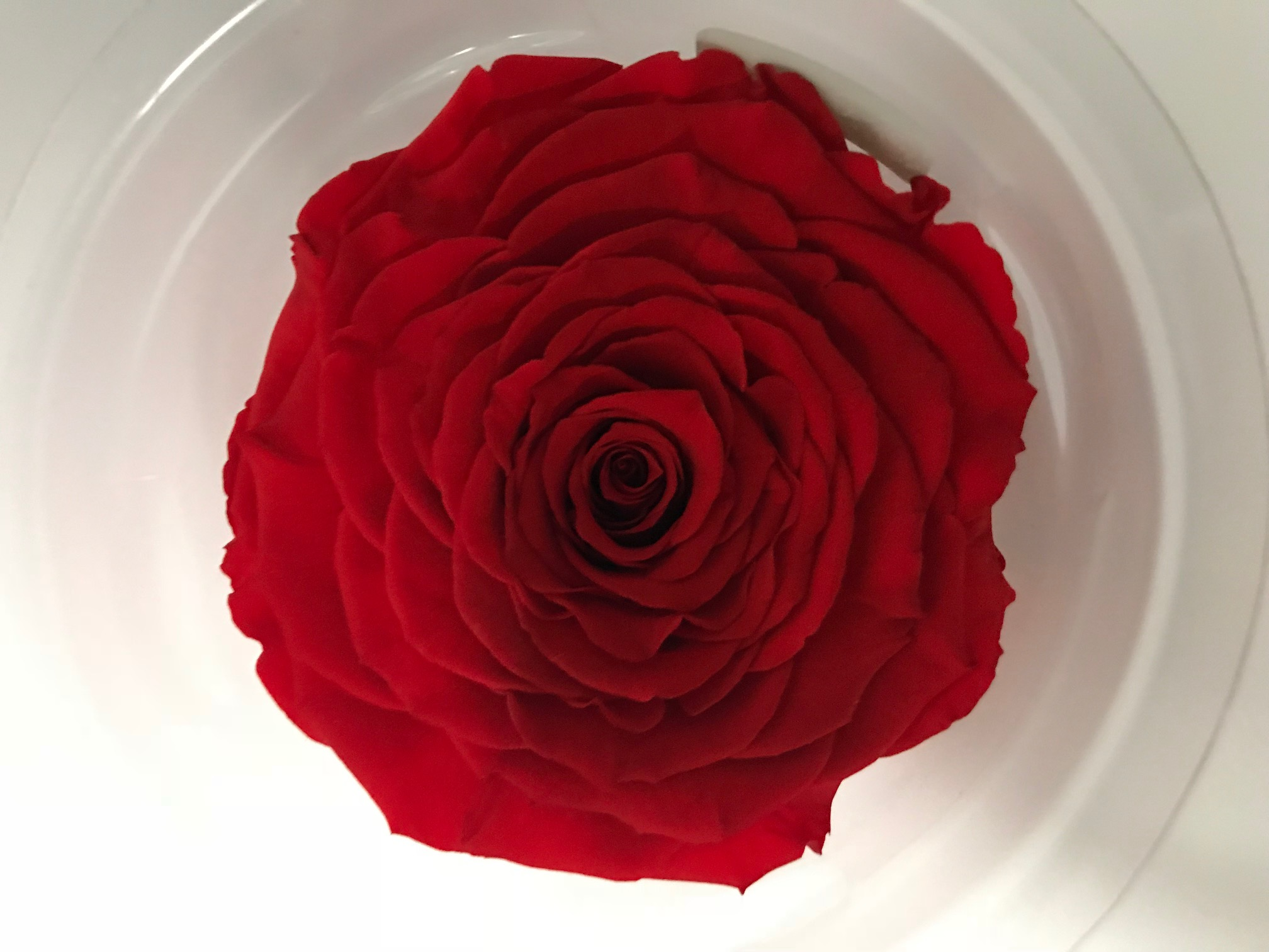 Last4ever Real Rose XXL ORA-03  (2)