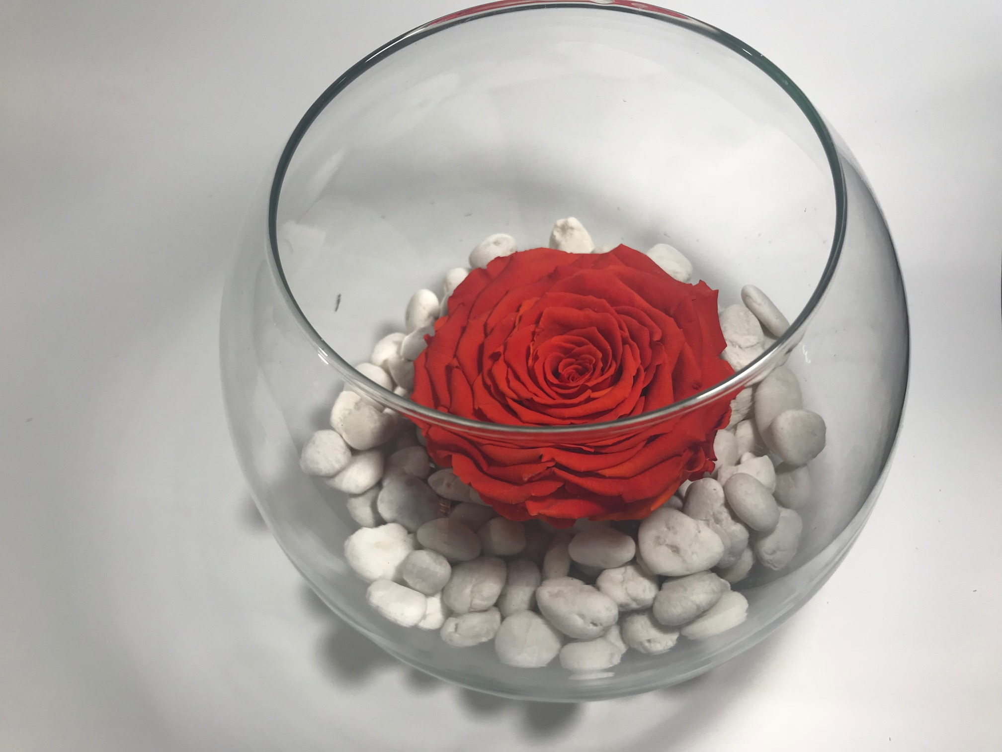 Big Glass bowl ( dia. 20cm) with XXL Last4ever Real Rose