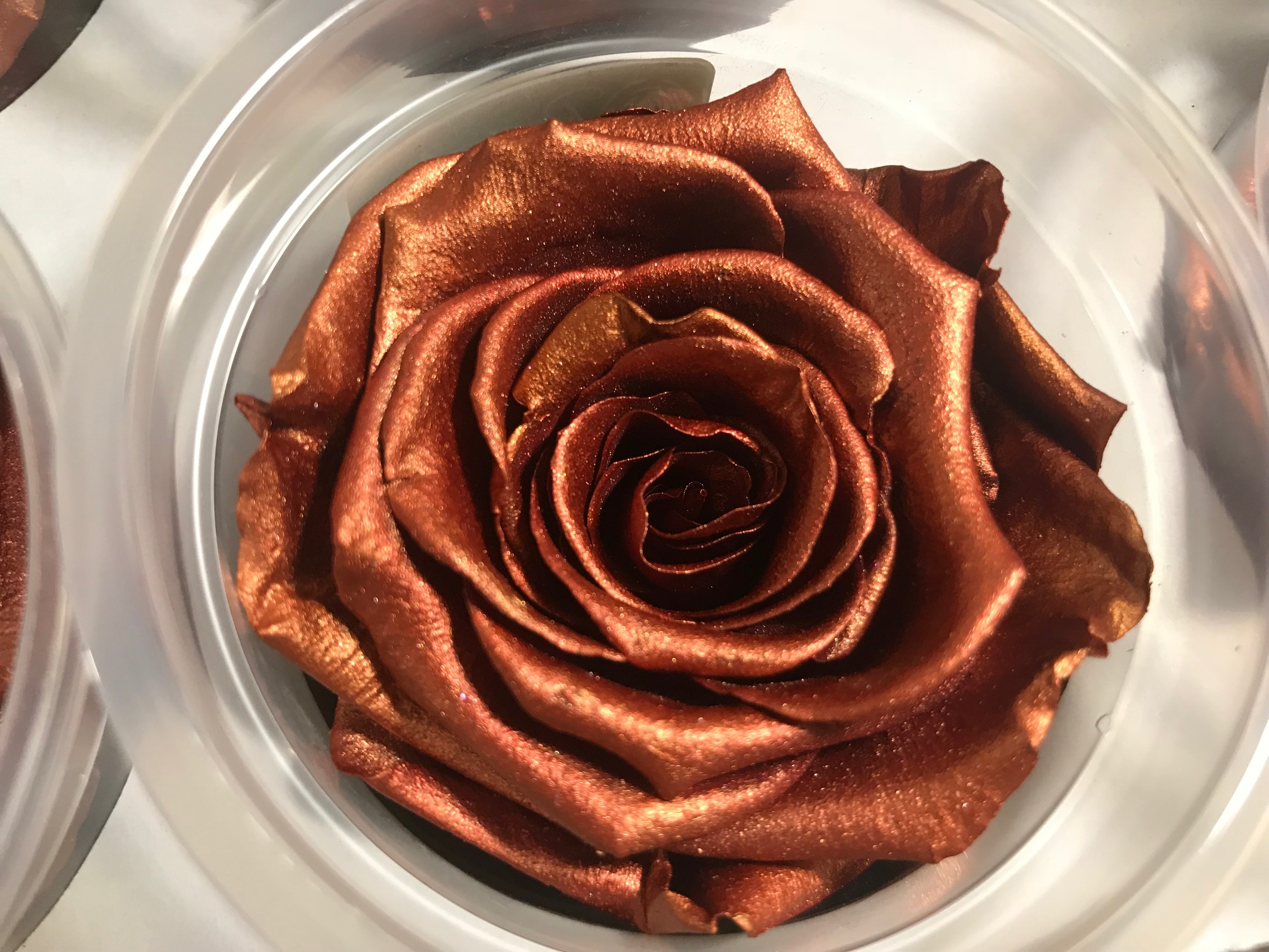 Last4ever Real Roses 6 in Box(retail) colour COPPER
