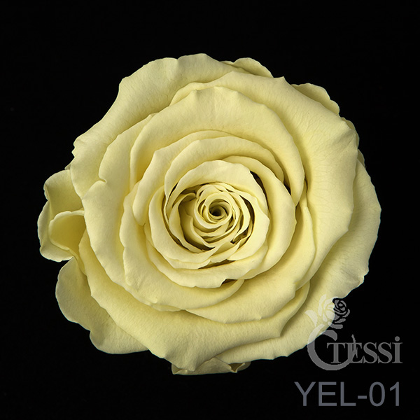 Last4ever Real Roses 6 in Box(retail) colour YEL-01